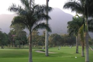 Palms at the course of the Itanhanga golf club in Rio de Janeiro.